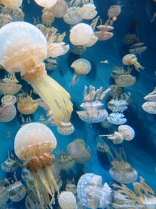 Victorian jellies 1