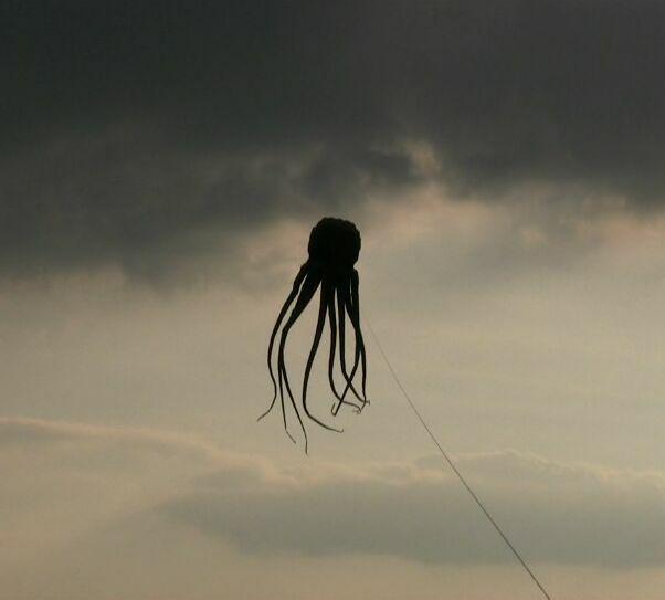 octopus-flying.jpg