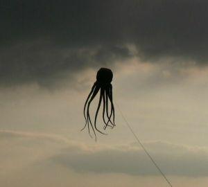 octopus flying