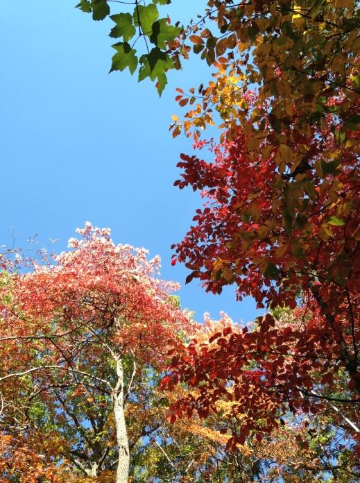 fall-leaves-georgia